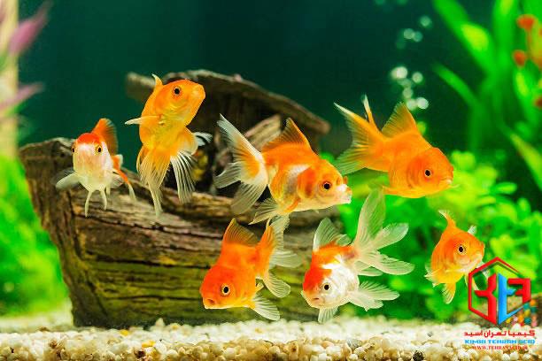 آمونیاک سمی برای ماهی ها