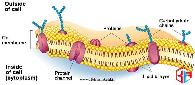 غشای سلولی