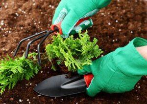 کاربرد کلرید پتاسیم در کشاورزی