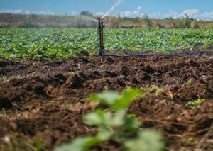 کاربرد سیلیس در کشاورزی