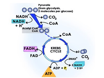 تولید اسید استیک